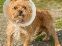QT's story QT is a spicy little terrier mix! She will