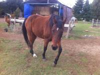he is a 13 yr old qt/thro gelding, i just have to many