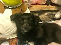 Quaker's story This adorable puppy is now in search of