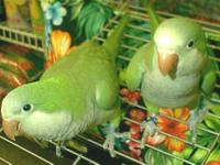 We are colsing out the conure aviary ,we have young