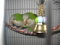 We are closing out the conure aviary and have some