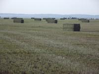 Alfalfa, Grass & Straw for sale.  I bale in 3x3x8,