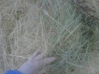 We have quality hay for sale, round bales made by
