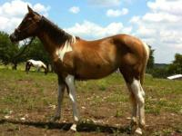Rafter E Ranch is offering many horses for sale or