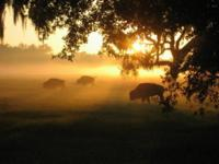 Privileged to introduce to you: Dancing Buffalo Ranch,