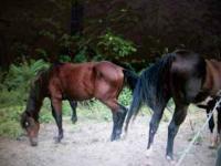 Quarter horse for sale. This beautiful quarter horse