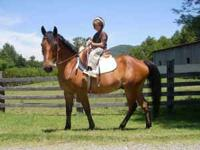 """Bulletproof or """"Bullet"""" is about 14.3 hh. Bullet is an"""
