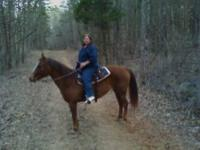 10 yr. old Western riding Quarter Horse for 1/2 lease