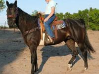 We have two quarter horse geldings that we need off our