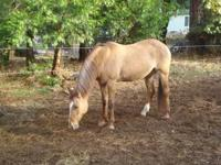 Honey is an 11 year old quarter horse mare. I love her