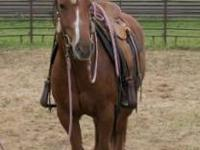 2005 Chestnut grade quarter horse mare. Pretty, easy to