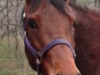 Mare: ?Sweet Toot A Lou? ? AQHA ? Foaling Date:
