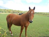 4yrs old. Has had a saddle, bridle, and person on