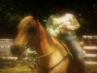 Stocky 15.2 hand golden palomino with blond mane and