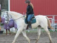 A registered sorrel quarter horse mare 11 years old for