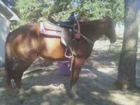 I have 3 gorgous horses for sale. 6yr old sorrel. Broke