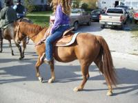 I have several Quarter Horses for sale or trade. Some