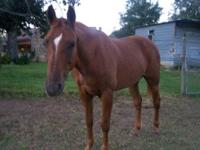 I have a 10 year old quarter horse for sale, he is