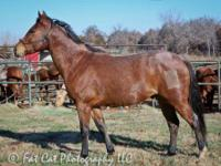 Quarterhorse - Bell Boy - Medium - Adult - Male -