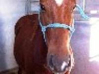 Quarterhorse - Charity - Large - Young - Female -