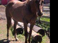 Quarterhorse - Charlotte - Medium - Senior - Female -