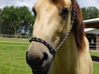 Quarterhorse - Classy - Medium - Adult - Female -