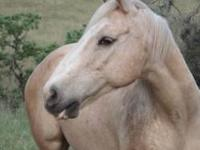 Quarterhorse - Diamond - Medium - Adult - Female -