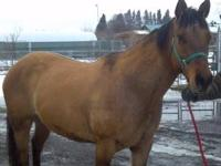 Quarterhorse - Etta - Large - Senior - Female - Horse