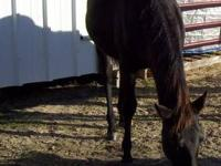 Quarterhorse - Flower - Medium - Young - Female -