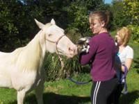 Quarterhorse - Flurry - Large - Adult - Female - Horse