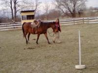 Quarterhorse - Happy - Medium - Adult - Female - Horse