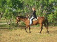 Quarterhorse - Hawk - Large - Young - Male - Horse It's