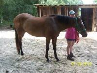 Quarterhorse - Lady - Large - Senior - Female - Horse
