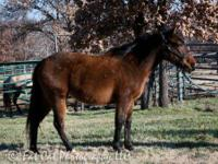 Quarterhorse - Lita - Medium - Young - Female - Horse