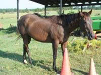 Quarterhorse - Luna Aka Fast Moon Deck - Large - Adult