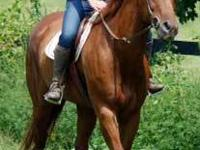 Quarterhorse - Scooter - Medium - Senior - Male -
