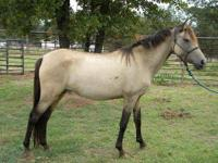 Quarterhorse - Sprite - Medium - Adult - Female -