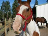 Quarterhorse - Buster & Black - Medium - Senior - Male