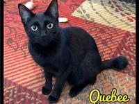 My story Quebee  Quebee is a sweet young fella who
