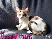 Queen of Hearts's story -- -- Kitten Division Adoption