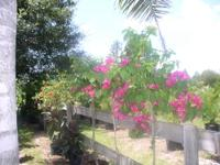 I have several 12 to 14 ft. field grown queen palms