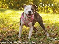 My story Queen is a very special girl.  She loves to