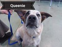 Queenie's story Say hello to Queenie. She is looking