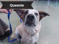 Say hello to Queenie.  She is looking for her new