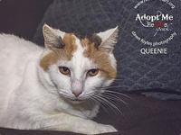 My story This is Queenie, a very sweet girl who has had