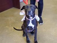 My story Say hello to Queenie. She is a female Pit mix