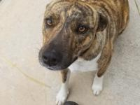 Very affectionate dog - all vetted  - is so