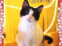 Quick, quick! Come check me out! I'm Quentin, and I