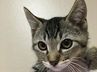 Quentin's story Quentin's $100. Adoption Fee is very
