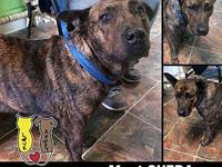QUERA's story MEET QUERA! A 3 year old, female, plott
